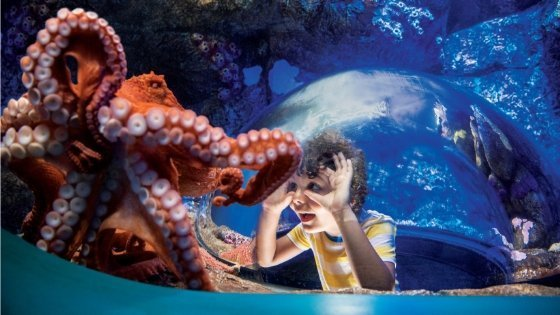 15 Tips for Visiting SeaWorld San Diego with Kids