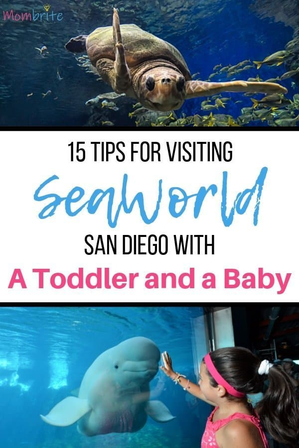 SeaWorld San Diego is the perfect family vacation when you have kids. They can touch sea life, get wet in the splash pad, watch animal shows, and much more!