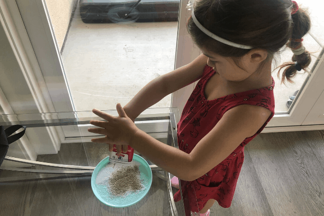 Salt-and-Pepper-Static-Electricity-Experiment