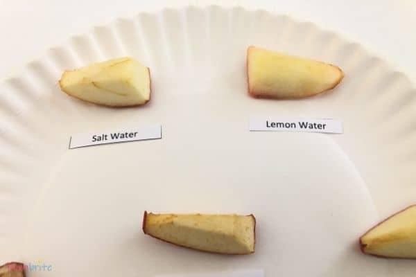 Apple Oxidation Experiment Salt Water Lemon