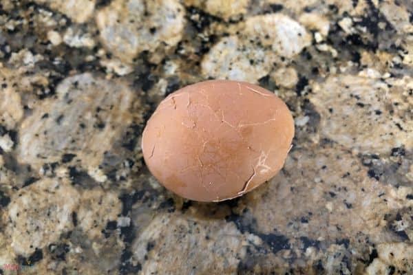 Dinosaur Eggs Broken Shells