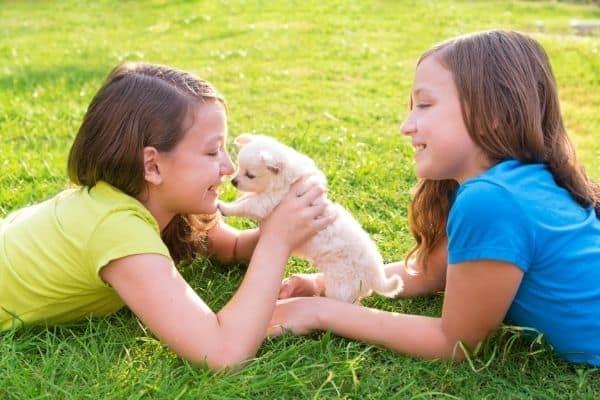 New Puppy and Children