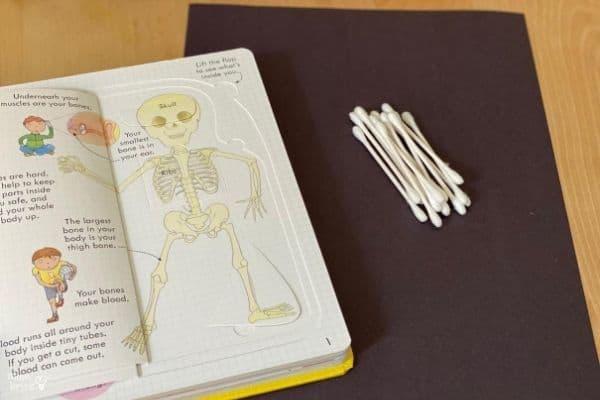 QTip Skeleton Materials