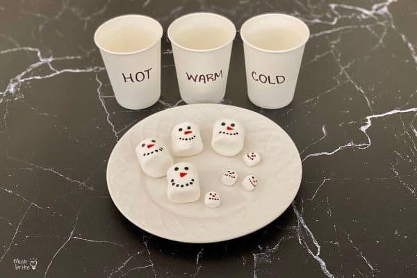 Hot Cocoa Marshmallow Experiment Setup (1)
