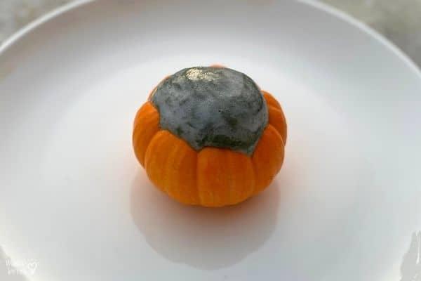 Pumpkin Volcano Black Lava (2)