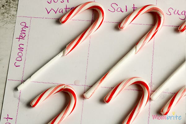 Dissolving Candy Canes used for melting Experiment