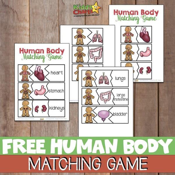 Human Body Matching Game