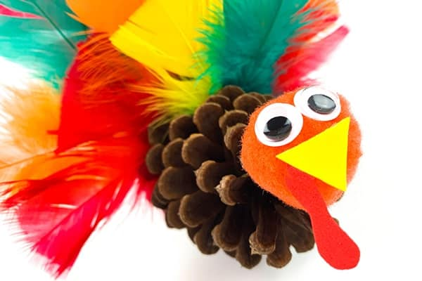 coloured feather used for pinecone turkey-min