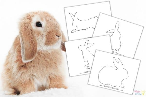 Bunny Rabbit Templates Mockup