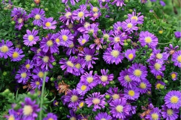 Flower Plant Image