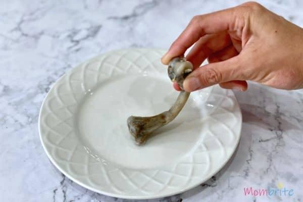 Bone in Vinegar Experiment Bend Bone on Plate
