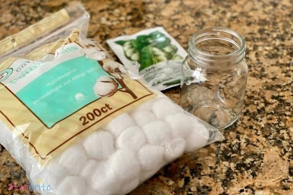Growing Seeds in Cotton Balls Supplies