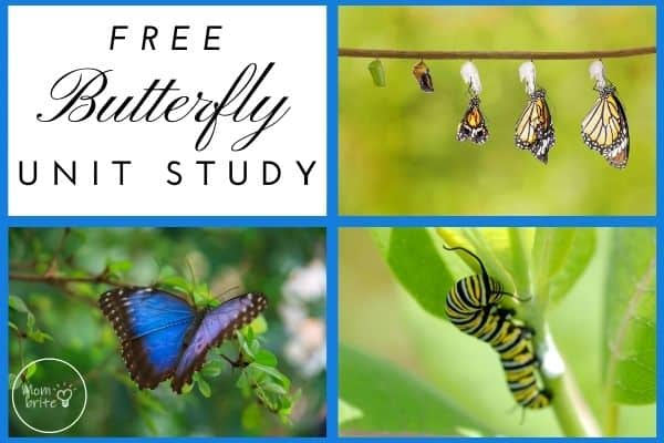 Free Butterfly Unit Study