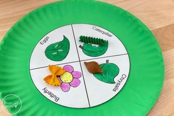 Learn About Butterfly Life Cycle Craft
