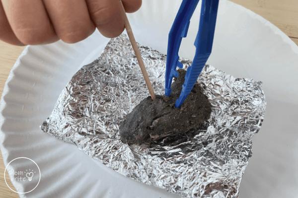 Owl Pellet Dissection Break Open Pellet