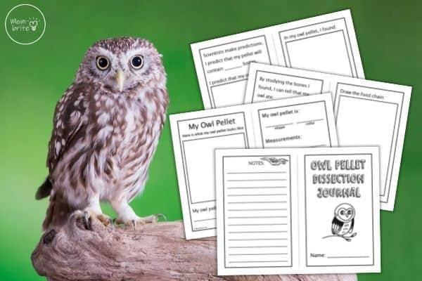 Owl Pellet Dissection Journal