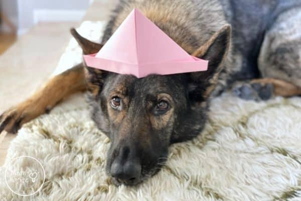 Paper Hat on Dog
